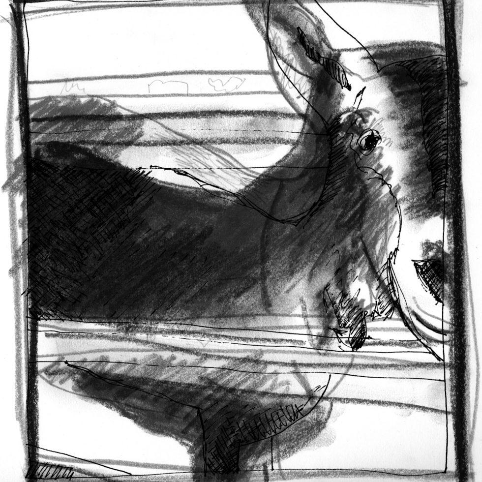 Layered goat drawings